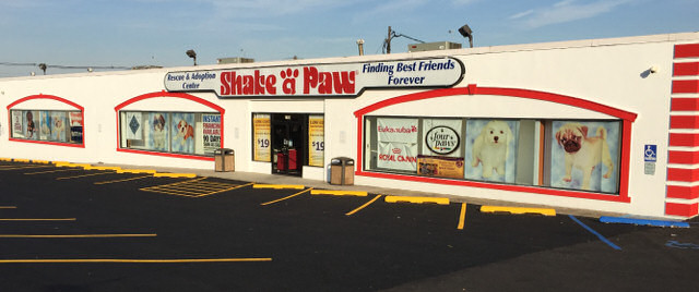 Shake A Paw - Union, NJ